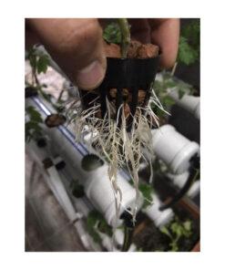 topraksız-tarım-hobi-seti-6