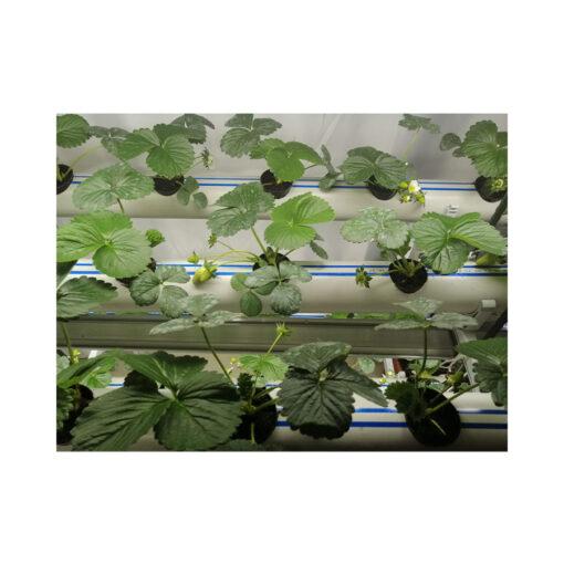 topraksız-tarım-hobi-seti-7